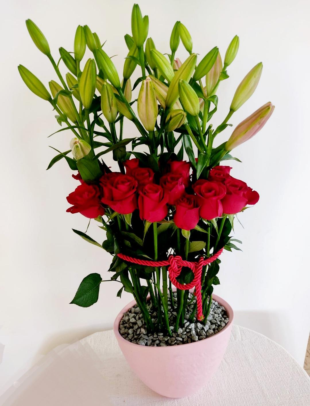 ליליות ורדים