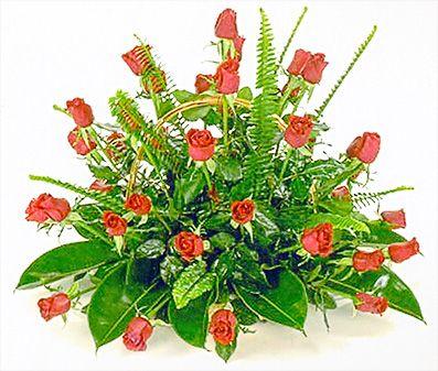 ורדים לתפארת